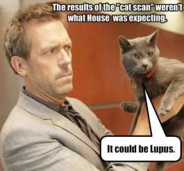 lupus-house-cat